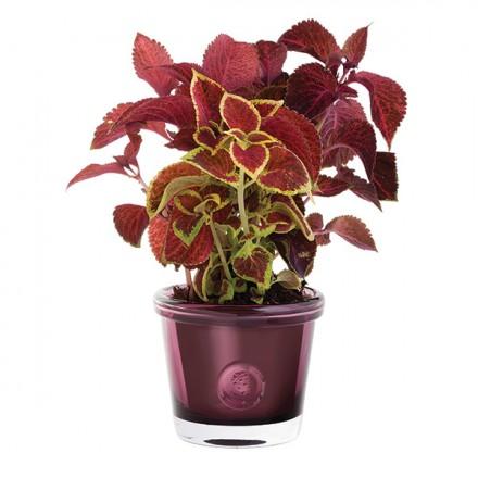 $50.00 RHS-Small Heather Flower Pot