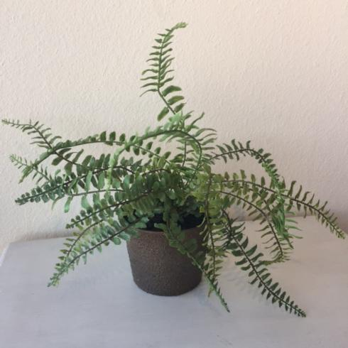$11.95 Assorted Potted Fern