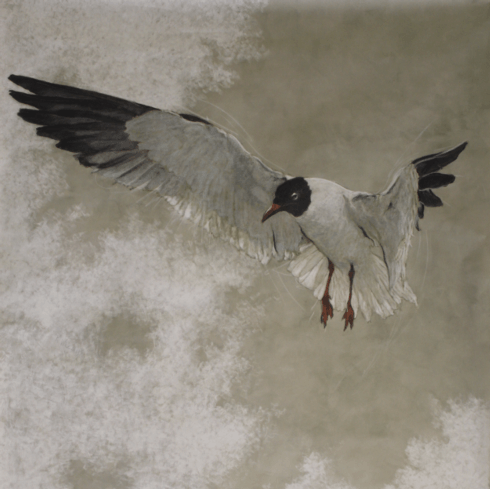 $3,200.00 Solo Gull by Kitty Williams