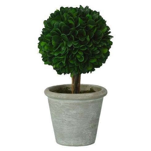 $38.00 Preserved Boxwood Topiary