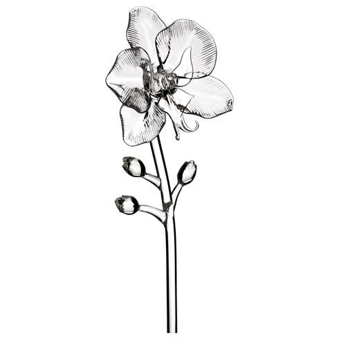 $75.00 Orchid Flower